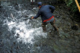 Dipnetting Salmon at Hidden Creek