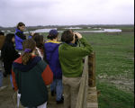 Birdwatching at San Luis National Wildlife Refuge