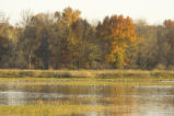 Wetland with autumn trees and ducks