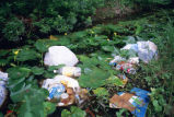 Litter pollution in wetland area