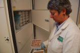 Avian Influenza Sampling Project