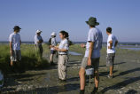 Partners restoring marsh habitat at Barren Islands National Wildlife Refuge