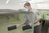 FWS Biologist Prepares Cages for Black-Footed Ferret