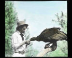 Gentleman feeding California condor. Hand painted glass slide.