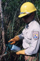 Fish and Wildlife Employee Sprays Melaleuca