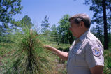 Fish and Wildlife Service employee showing tree