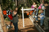 Children enjoying Monarch butterfly stop on boardwalk at St Marks National Wildlife Refuge