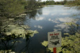 Alligator warning sign.
