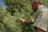 U.S. Fish and Wildlife Service inspects Salt Cedar.