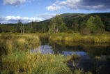 Wetland in the Catskills Mountains