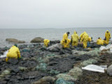 Buzzards Bay Oil Spill