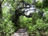 Bayou Sauvage Ridge Trail Before Katrina093