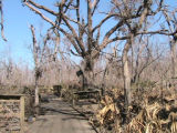 Bayou Sauvage Ridge Trail after Hurricane Katrina